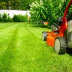 Газоны для профессиональных садоводов и любителей