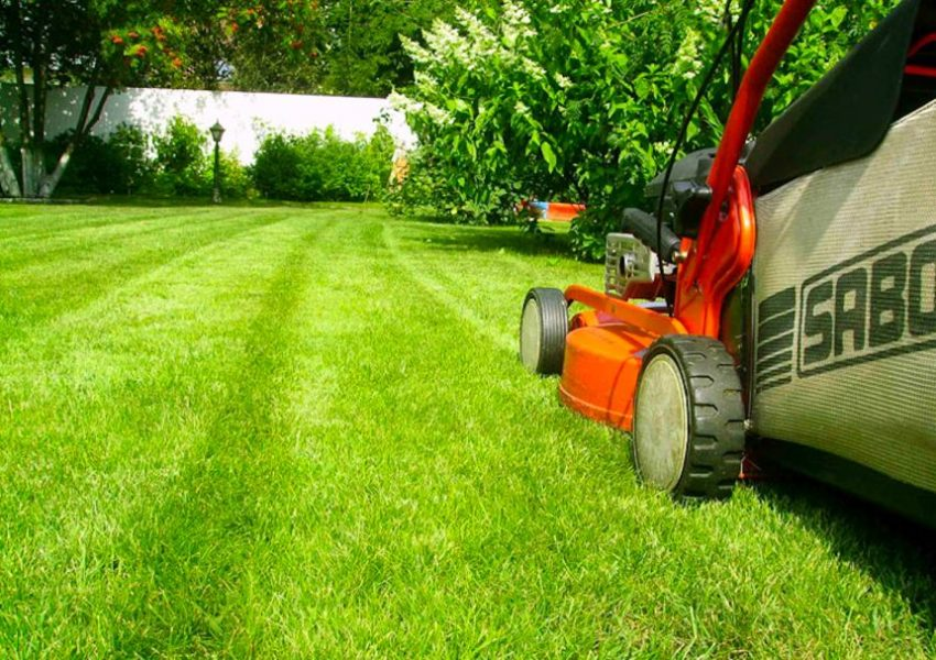 Lawns for professional gardeners and Amateurs5664