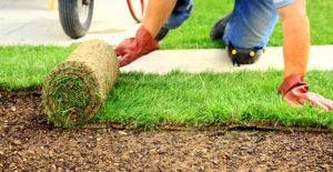 Lawns for professional gardeners and Amateurs